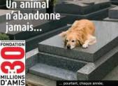 plus de 100 00 animaux sont abandonnées tous les ans dites stop